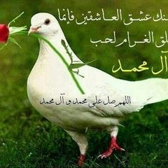 malok_salah alali